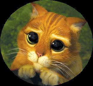 Chat_potte4